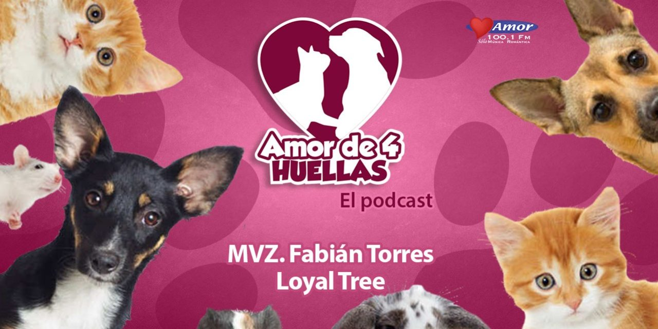 Amor de 4 huellas – Fabian Torres de Loyal tree pet